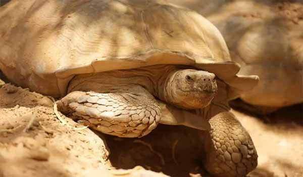 World Turtle Day celebrated on 23rd May Each year
