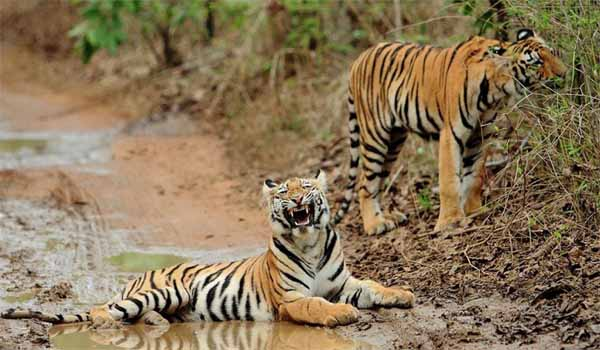 Chhattisgarh set-up a new Tiger Reserve Park in Kotiya district